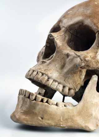 skull-color-teeth-46510